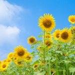 8月の結婚式は「夏」×「涼」が最強テーマ。そして、注意点はコレ!
