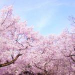 4月の結婚式は意外と人気がない?春で桜もキレイな月だけど・・・・