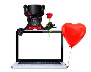 valentines french bulldog dog holding a red rose behind a laptop pc computer tablet , isolated on white background